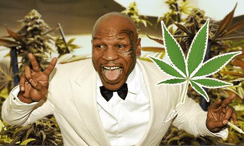 Mike Tyson pravidelne fajčí jointy a buduje obrovský areál, ktorý by sa mal stať rajom pre všetkých podporovateľov Marihuany.