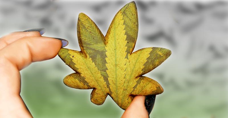 marihuanové koláčiky