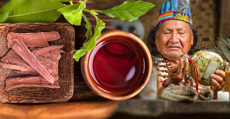 Kratom a kanna šamanské drogy