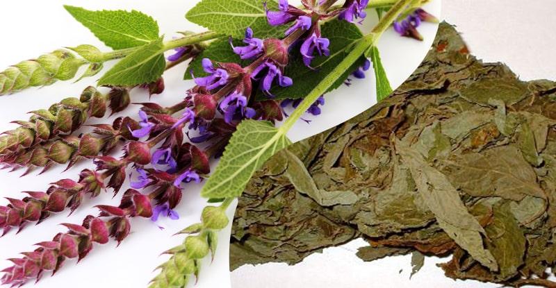 kvety a sušené listy rastlinnej drogy šalvia divotvorná (salvia divinorum)